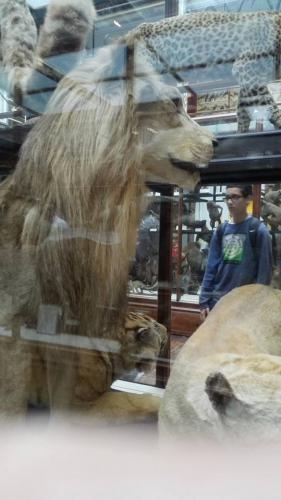 Excursión a museo en Dublín